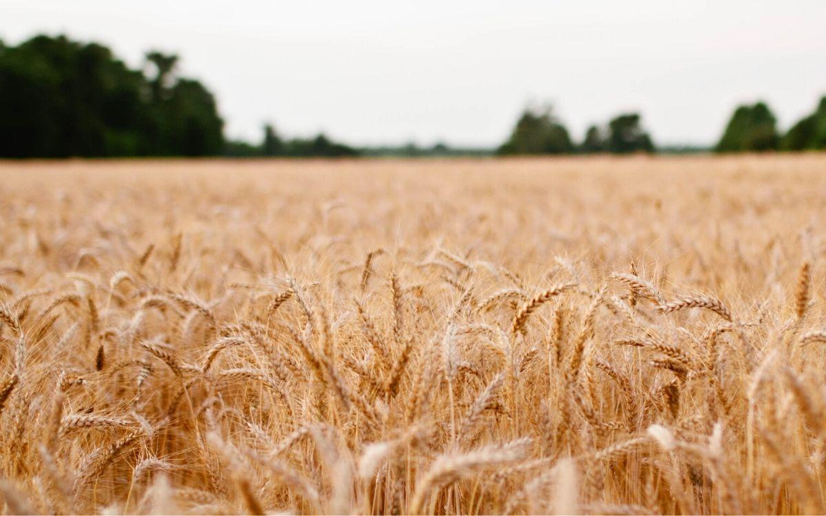 Jak samodzielnie zdiagnozować nietolerancję glutenu?